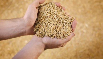 Российский биржевой рынок зерна